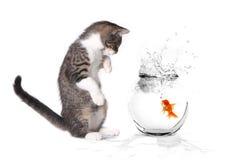 Kätzchen, das mit einem Goldfish spielt lizenzfreies stockbild
