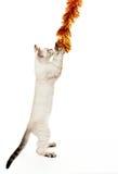 Kätzchen, das mit einem Weihnachtsfilterstreifen spielt. Lizenzfreie Stockfotos
