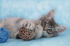 Kätzchen, das mit einer Kugel spielt lizenzfreies stockfoto