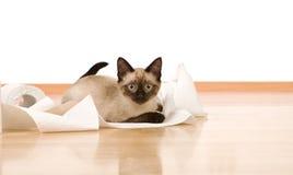 Kätzchen, das mit einer Toilettenpapierrolle spielt Lizenzfreie Stockbilder