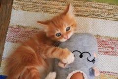Kätzchen, das mit Fuß spielt stockfotografie