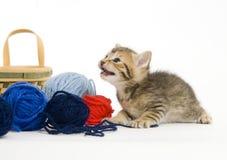 Kätzchen, das mit Garn spielt Stockbild