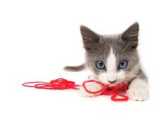 Kätzchen, das mit Garn spielt Lizenzfreie Stockfotos