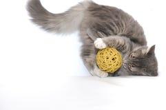 Kätzchen, das mit Kugel spielt Stockfotografie