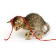 Kätzchen, das mit rotem Garn spielt Stockbild