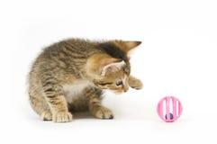 Kätzchen, das mit Spielzeug spielt Stockfoto