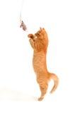 Kätzchen, das mit Spielzeugmaus spielt Stockfoto
