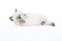 Kätzchen, das mit Spielzeugmaus spielt Lizenzfreies Stockbild