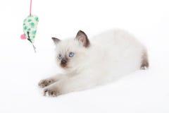 Kätzchen, das mit Spielzeugmaus spielt Stockfotos