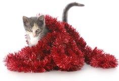 Kätzchen, das mit Weihnachtsgirlande spielt Stockbilder