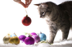 Kätzchen, das mit Weihnachtsverzierungen spielt Lizenzfreie Stockfotos