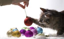 Kätzchen, das mit Weihnachtsverzierungen spielt Lizenzfreies Stockbild