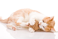 Kätzchen, das mit Wollekugel spielt Stockbild