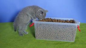 Kätzchen, das Nahrung für Haustiere vom Kasten isst stock video