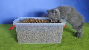 Kätzchen, das Nahrung für Haustiere vom Kasten isst stock video footage