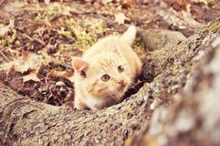 Kätzchen, das oben atree schaut Stockfoto