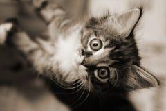 Kätzchen, das oben schaut Stockbilder