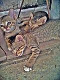 Kätzchen, das oben schaut Stockfoto