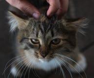 Kätzchen, das oben schaut, sitzend auf dem Bretterboden Stockfotos