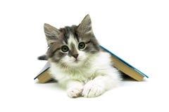 Kätzchen, das unter einem Buch auf einem weißen Hintergrund liegt Stockbild