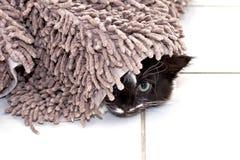 Kätzchen, das unter Teppich sich versteckt Lizenzfreies Stockbild