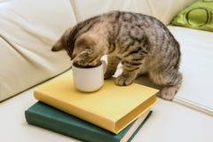 Kätzchen, das von der Schale auf der Ledercouch trinkt Grüne und gelbe Bücher Lizenzfreies Stockfoto