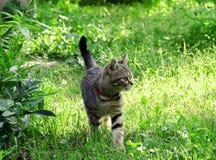 Kätzchen in den Gartenwegen lizenzfreies stockbild
