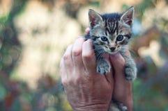 Kätzchen in den Händen des Mannes lizenzfreie stockfotos