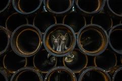 Kätzchen in den Rohren Stockbilder