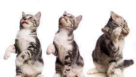 Kätzchen in den Tätigkeiten Stockbilder