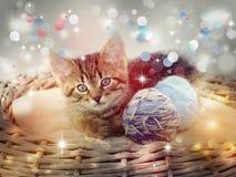 Kätzchen in den Weihnachtslichtern Lizenzfreie Stockbilder