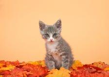 Kätzchen der getigerten Katze, das im Herbstlaub mit orange Hintergrund sitzt Lizenzfreie Stockfotos