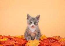 Kätzchen der getigerten Katze, das im Herbstlaub mit orange Hintergrund sitzt Lizenzfreies Stockbild