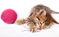 Kätzchen der getigerten Katze, das mit einem Ball des Garns spielt Lizenzfreie Stockbilder
