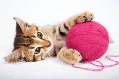 Kätzchen der getigerten Katze, das mit einem Ball des Garns spielt Stockbild
