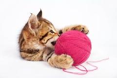 Kätzchen der getigerten Katze, das mit einem Ball des Garns spielt Stockfotos