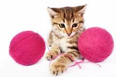 Kätzchen der getigerten Katze, das mit einem Ball des Garns spielt Stockfoto