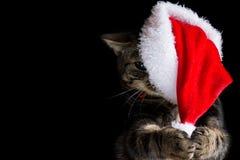 Kätzchen der getigerten Katze, das Sankt-Hut mit ihren Tatzen entfernt Stockbild