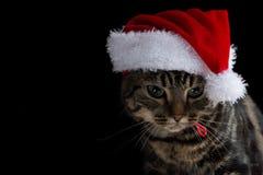Kätzchen der getigerten Katze mit Sankt-Hut, der unten schaut Lizenzfreie Stockfotos
