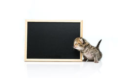 Kätzchen der getigerten Katze mit schwarzem Brett auf weißem Hintergrund Lizenzfreies Stockbild