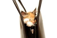 Kätzchen in der Handtasche getrennt auf Weiß Lizenzfreies Stockfoto