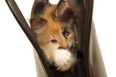 Kätzchen in der Handtasche getrennt auf Weiß Stockfotos