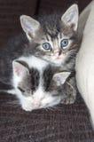 Kätzchen der kleinen Schwester Stockfoto