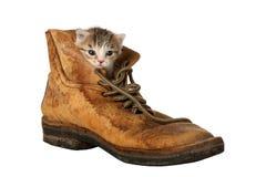Kätzchen in der Matte stockbilder
