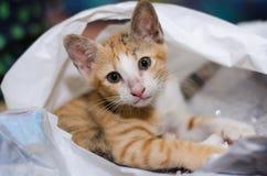 Kätzchen in der Plastiktasche Stockfotos