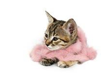 Kätzchen in der rosafarbenen Feder-Boa stockbild