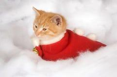Kätzchen in der roten Feiertagsweste Stockfotografie