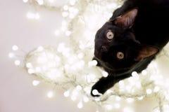 Kätzchen der schwarzen Katze Lizenzfreies Stockbild