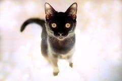 Kätzchen der schwarzen Katze Lizenzfreies Stockfoto