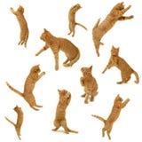 Kätzchen in der Tätigkeit Lizenzfreie Stockbilder